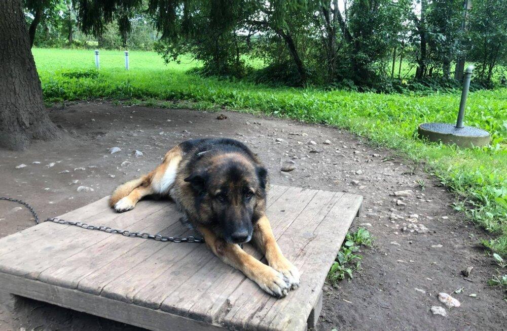 Nädalavahetusel ootamatult surnud mehe koerad vajavad kiiremas korras uut kodu