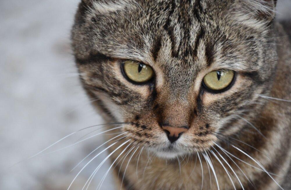 7 tegevust, mis tegelikult ärritavad su kassi