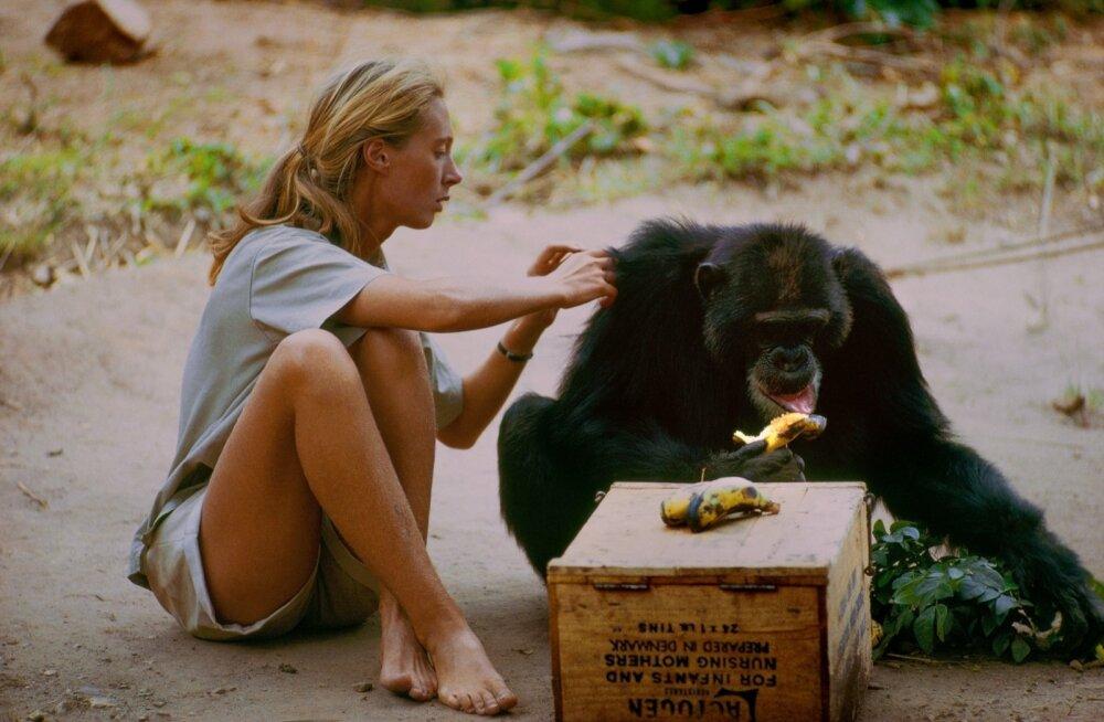 """Režissöör Brett Morgeni liigutav portreefilm """"Jane"""" toob varem nägemata kaadrite põhjal vaatajani avameelse portree Jane Goodallist, naisest, kelle avastused šimpanside uurimisel muutsid maailma."""