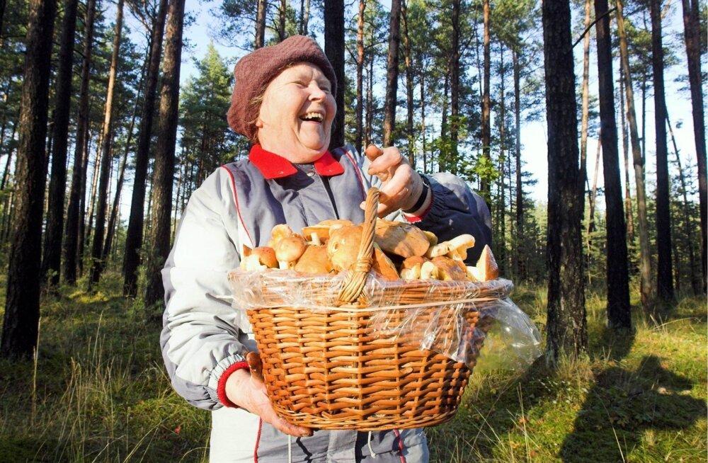 Mobiiltelefon on abimees: kuidas hoolitseda, et eakas seenel või marjul käija metsa ära ei kaoks