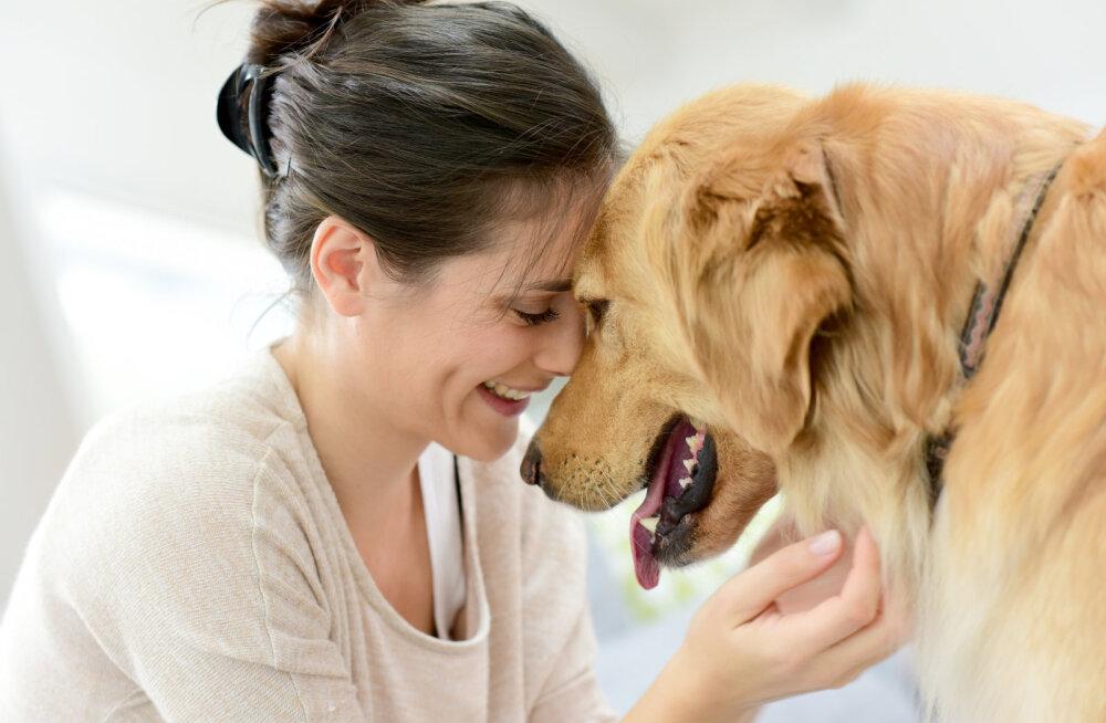 Kust tuleb koertel komme alalõpmata inimese nägu lakkuda?