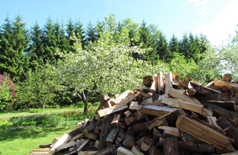Leili metsalood | Puuhalud, õitsvad õunapuud ja harakapesa