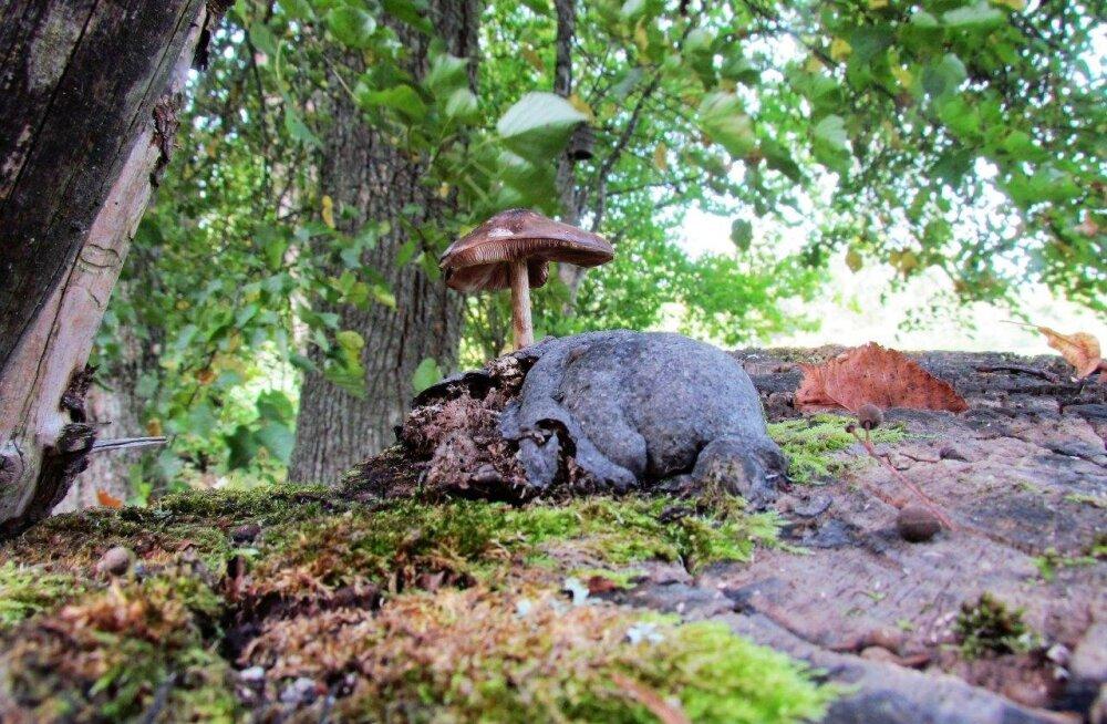 Leili metsalood | Sügis jõudis kohale
