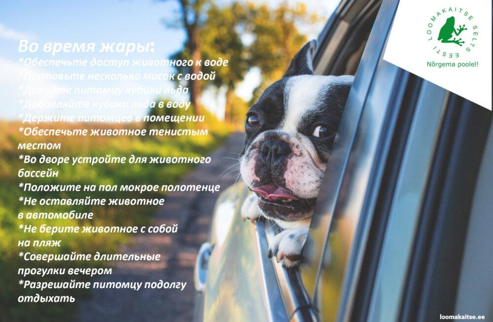 Эстонское общество защиты животных: не оставляйте в жару своих питомцев в машине и на солнцепеке!