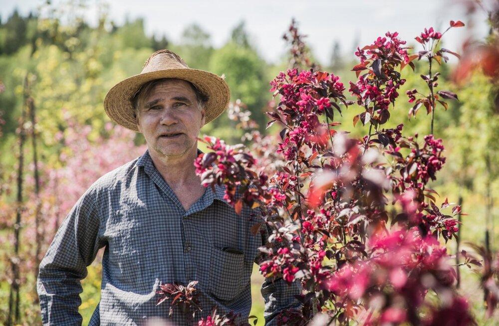 Loo autor Madis Jürima oma puukooli iluõunapuude keskel.