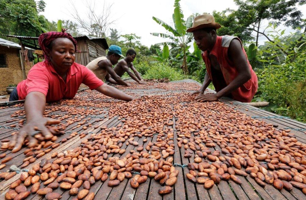 Aafriklased kakaoubadega.