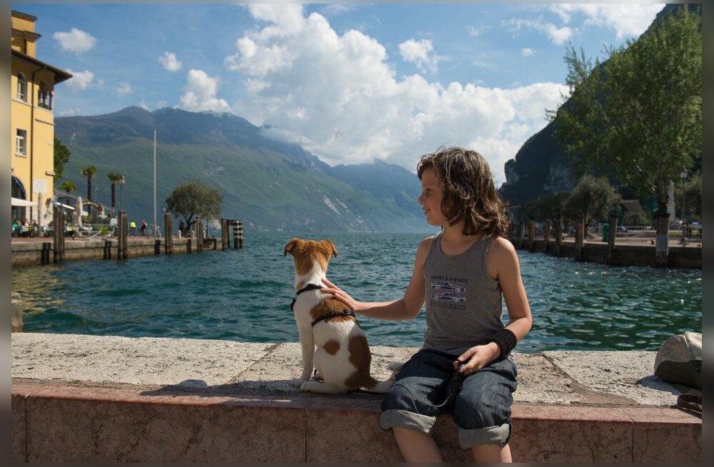 Kuidas end kaitsta? 15 tõsist haigust, mis sind lemmikloomade kaudu ohustavad