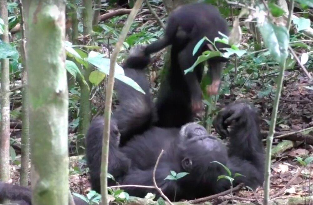 PÄEVA NUNNUD | Vaata, kuidas šimpans oma pojaga lennukit mängib