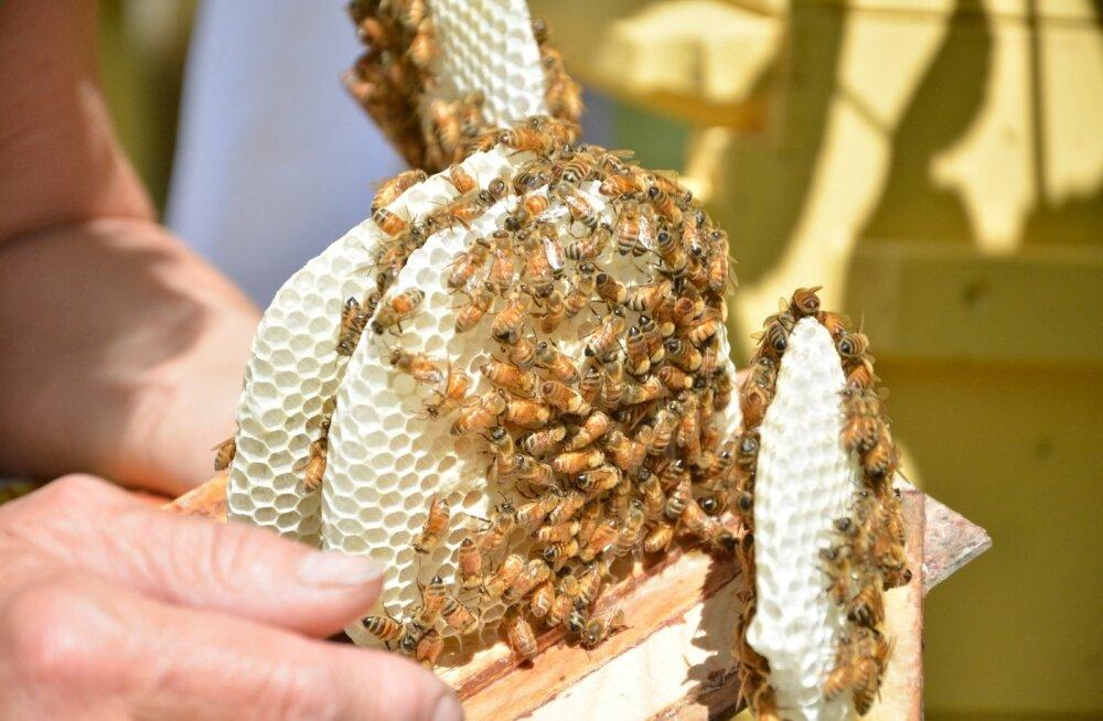 OÜ Artocarpus mesila Lääne-Virumaal