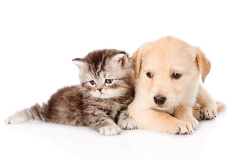 TEST | Millist kummalist paari loomariigist esindate sina ja sinu partner?
