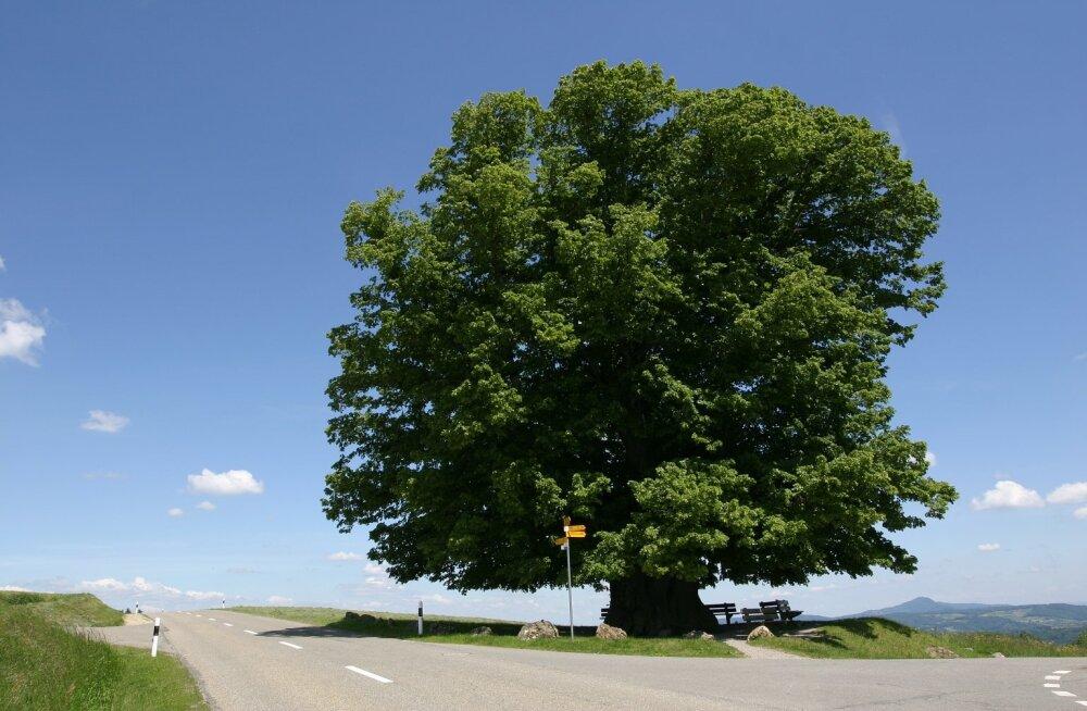 Meie planeedil kasvab kolm triljonit puud