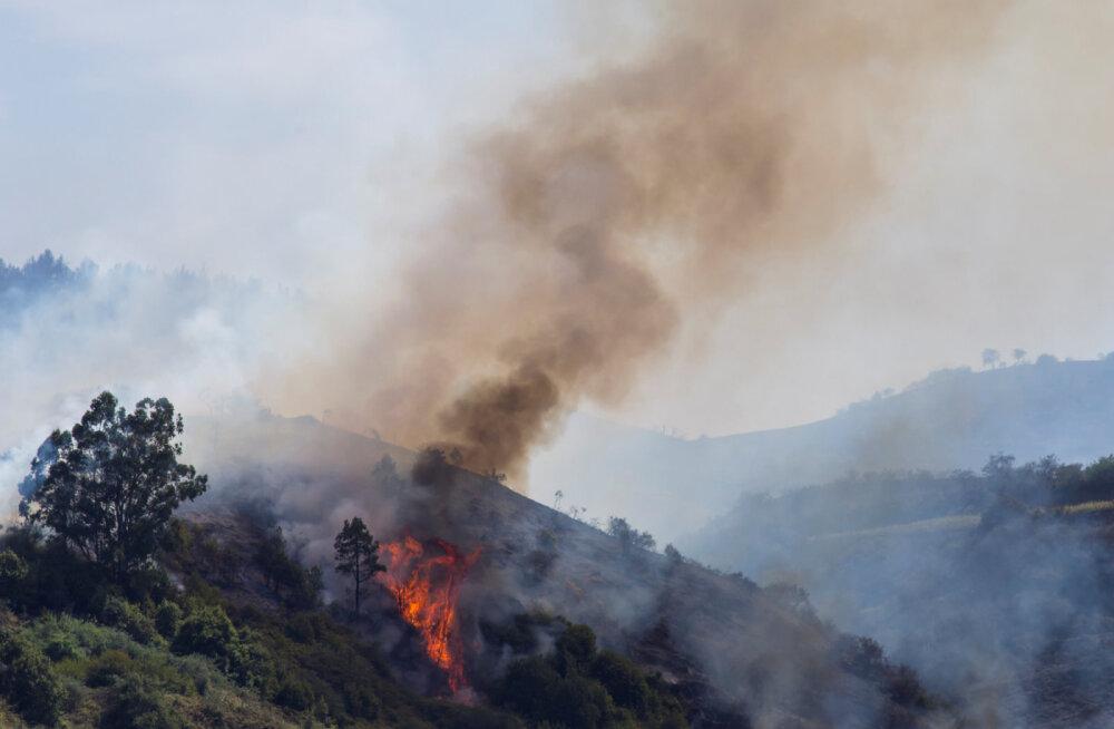 Около 10 тысяч человек эвакуированы с одного из Канарских островов из-за пожаров