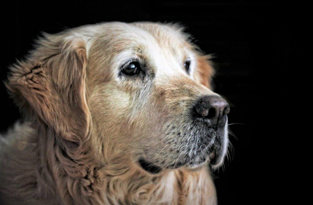 Elustiil määrab: kuidas koera vananemist mõnevõrra edasi lükata?