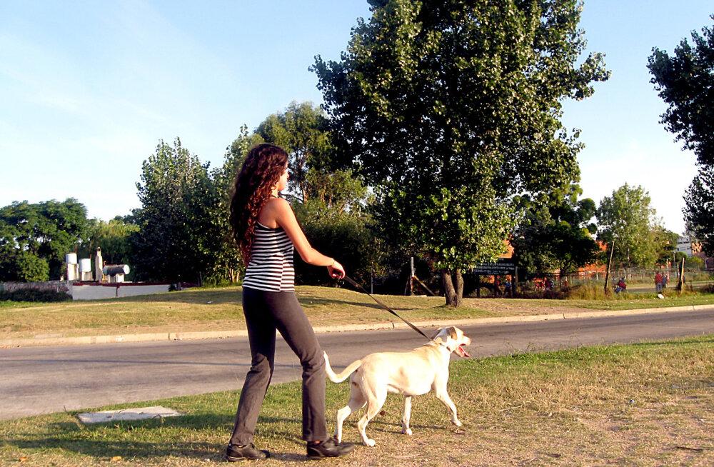 HUVITAV TEADA: Miks koerad võõrale lähenedes kaarega kõnnivad?
