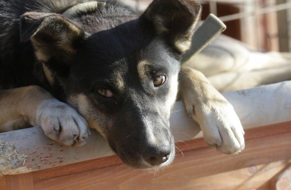 Kodutud koerad Sotšis