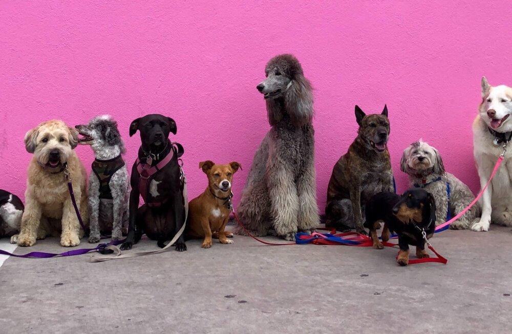 ФОТО и ВИДЕО | Житель Мексики спас 300 животных от урагана, поселив их у себя дома