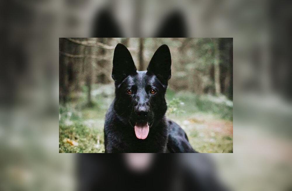 FOTO | Teenistuskoer Mac soovib kõigile oma karvastele kolleegidele vahvat rahvusvahelist koerapäeva