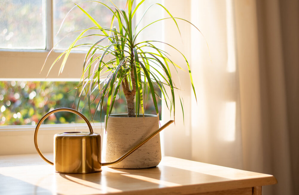 Need on parimad õhupuhastajad taimed, mis sobivad igasse koju