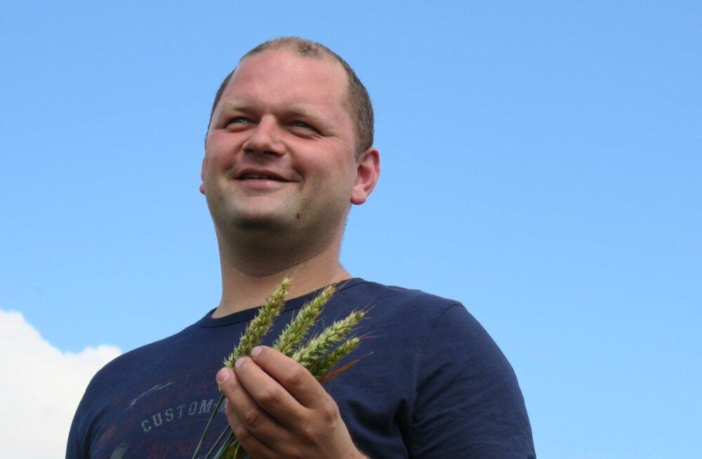 Madis Tamm katsetab oma põldudel viit nisusorti. Võistlussordiks valis ta tänavu 'Creatori'.