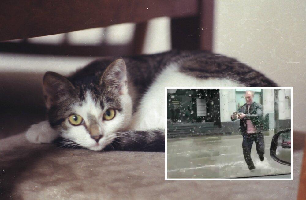 ФОТО: Как поживает спасенный летом от потопа котенок?