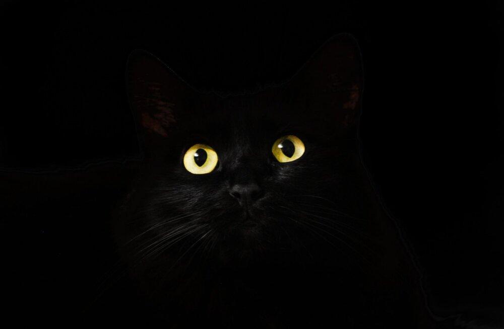 Väike must – klassika ja alati moes: oktoobris annab varjupaik musta kassi peaaegu tasuta!