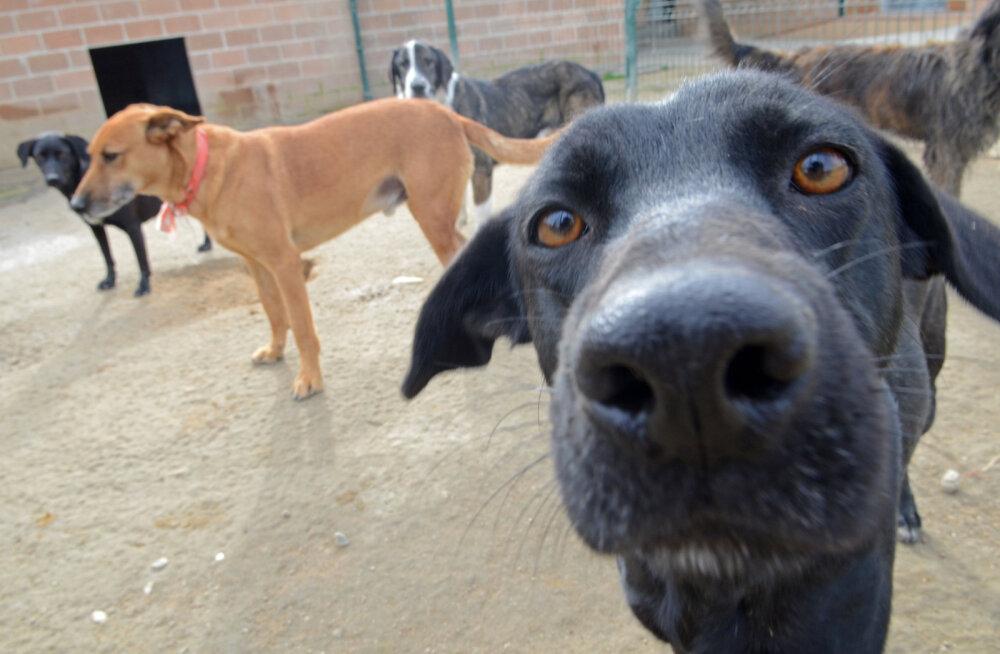 Kas koerad oskavad tõepoolest oma ninaga kellaaega määrata?