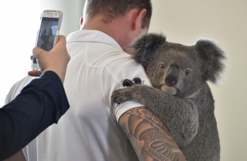 ФОТО и ВИДЕО: В результате лесных пожаров в Австралии погибли более 1 млрд животных