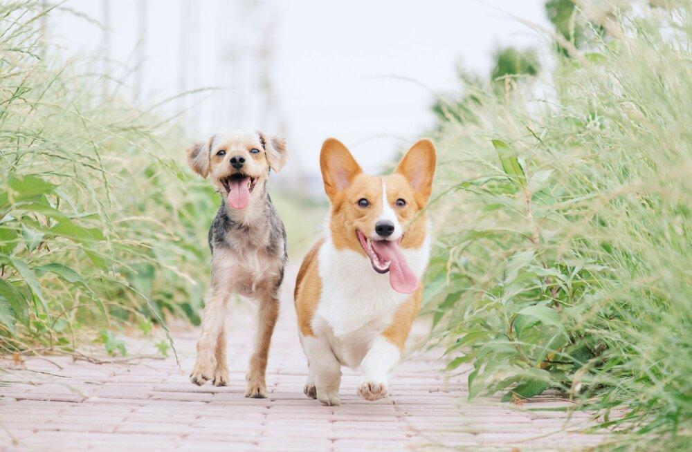 Uuring: lapsed, kes kasvavad üles koeraga peres, käituvad paremini ja on lahkemad