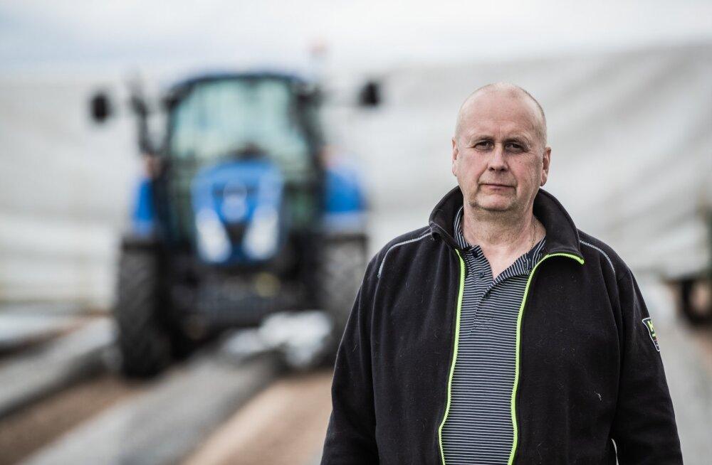 Helme Maasikakasvatuse juht ja omanik Andrus Horn