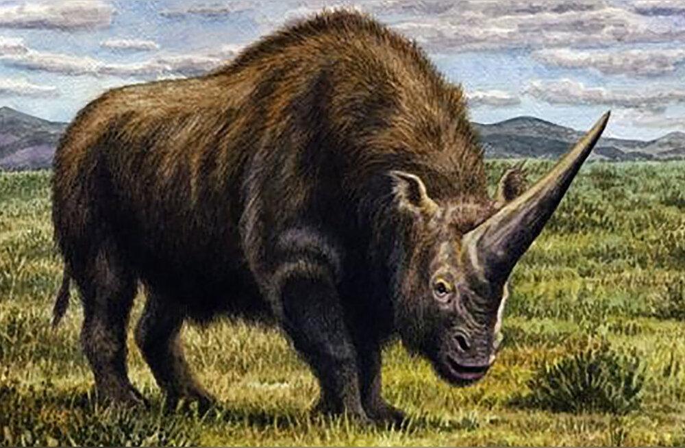 """Siberi """"ükssarviku"""" uurimine aitab võidelda ninasarvikute välja suremisega"""