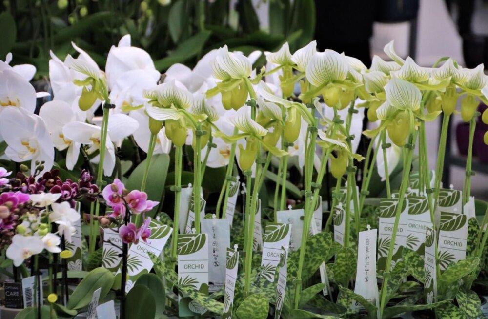 ФОТО: В Ласнамяэ открывается крупнейший садоводческий центр