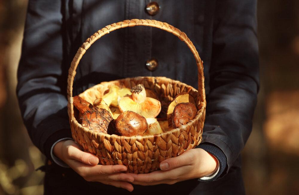 Rahvakalendri järgi on täna pärtlipäev: mine metsa seenele või hoopis kallimale kosja!