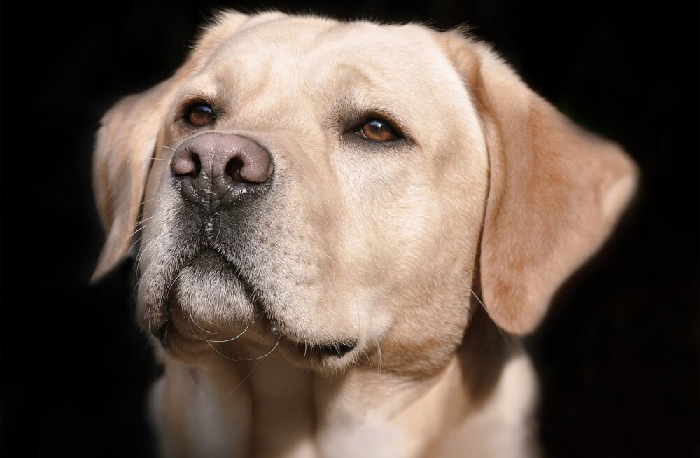 Saladusi ei ole: 5 üllatavat asja, mida sinu koer tunnetada suudab