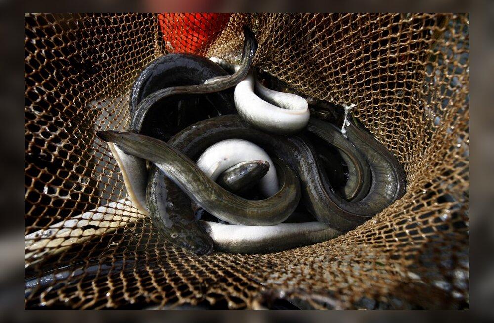 Kala töötlemine ja turustamine Eestis