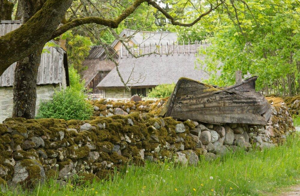 Koguva tarede palgid tuli tuua mandrilt, vaid paatide kiilupuuks sobivad tammed ehk kasvasid külametsas.