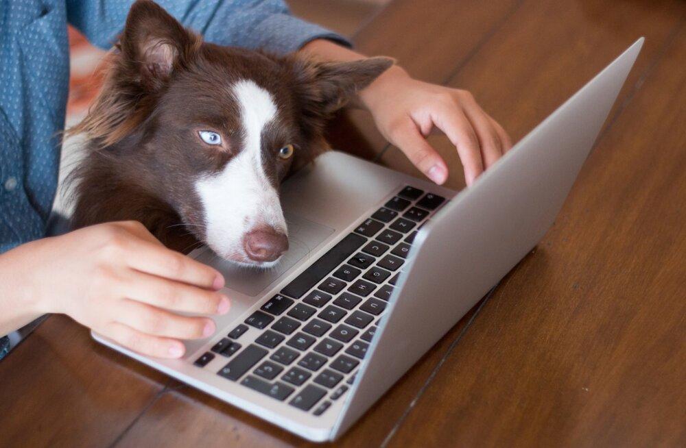Kõige energiasäästlikum on sülearvuti, kuna kulutab elektrit isegi 80% vähem kui lauaarvuti.