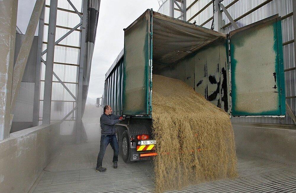 Mahevilja on kõige mõistlikum hoiustada mahevilja terminalis, vilja vedava auto kast peab olema hoolikalt puhastatud.