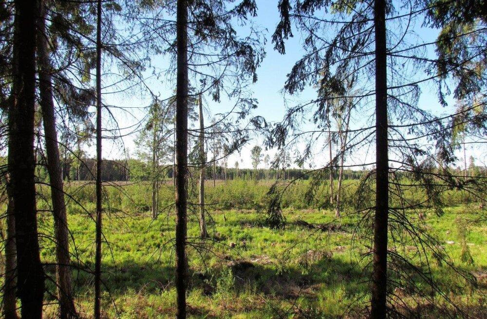 Leili metsalood | Kui puude taga polegi metsa