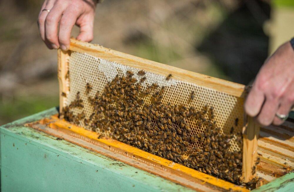 Mesinike meelest on mesilasperede toetus teretulnud, hoolimata väikesest summast.