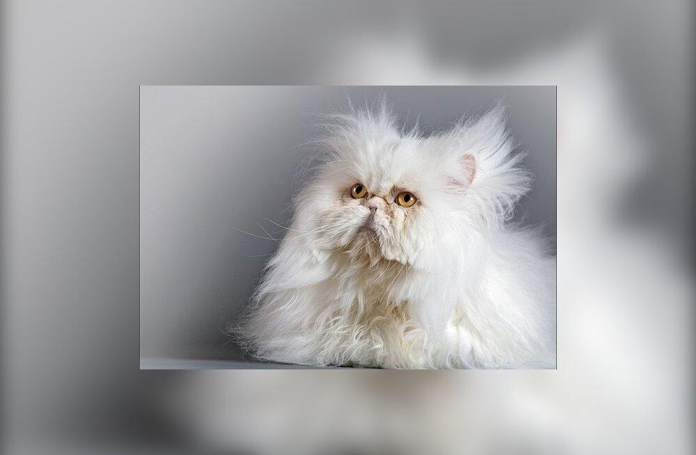 Valge kassi fotokonkursi võitjad on selgunud
