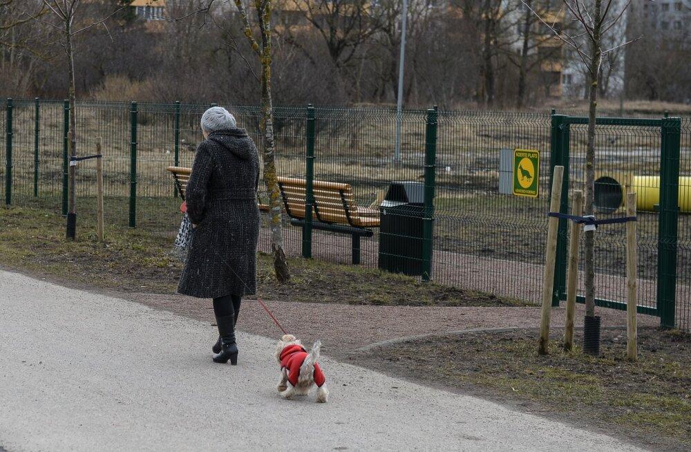 Lasnamäe koerte jalutusplats