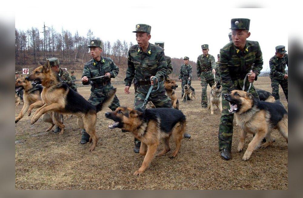 VIDEO: Põhja-Korea uus relv - sõdurkoerad