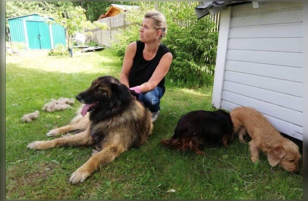 Reksu südamlik lugu | koera ootas ees eutanaasia, sest pere otsustas ühel päeval maalt linna kolida