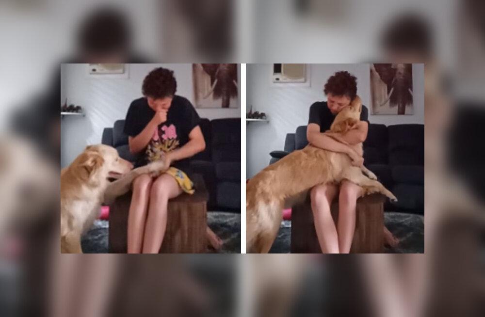 LIIGUTAV VIDEO | Koer aitab perenaise paanikahoogu leevendada