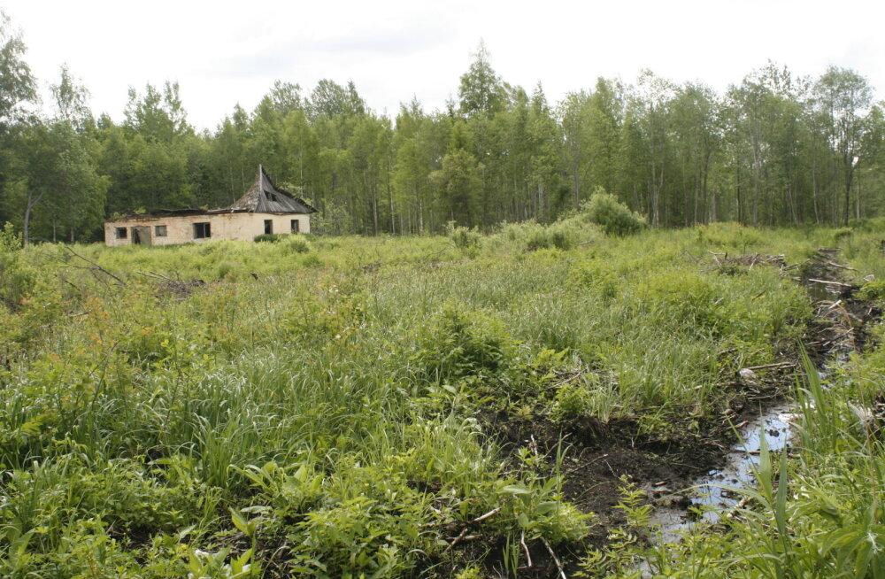 Kunagised asundustalude maad kattuvad metsaga