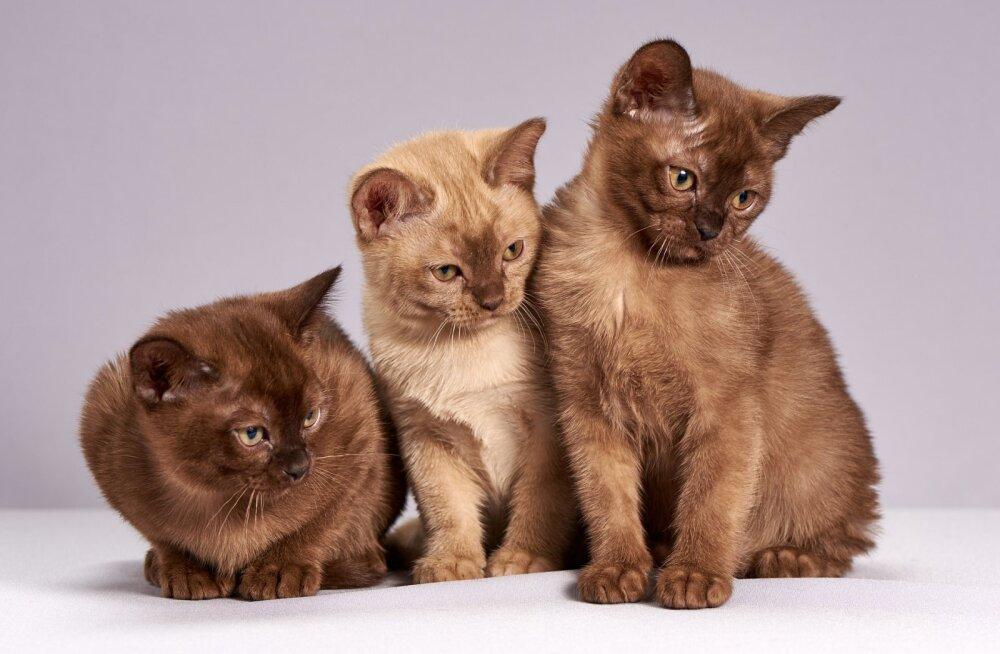 Kuidas kassid omavahel suhtlevad?
