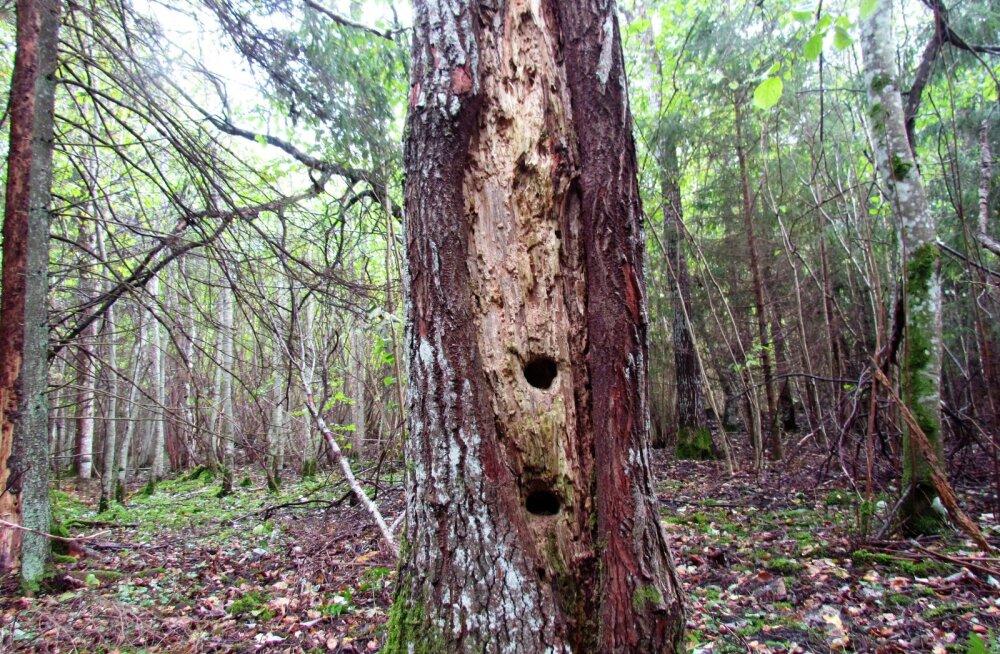 Leili metsalood | Siit metsast ei tohi võtta ühtki pirrutikku