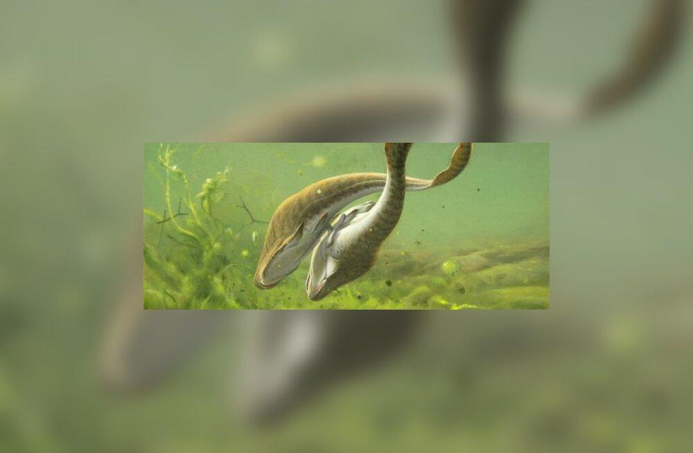 Seks on 350 miljonit aastat vana