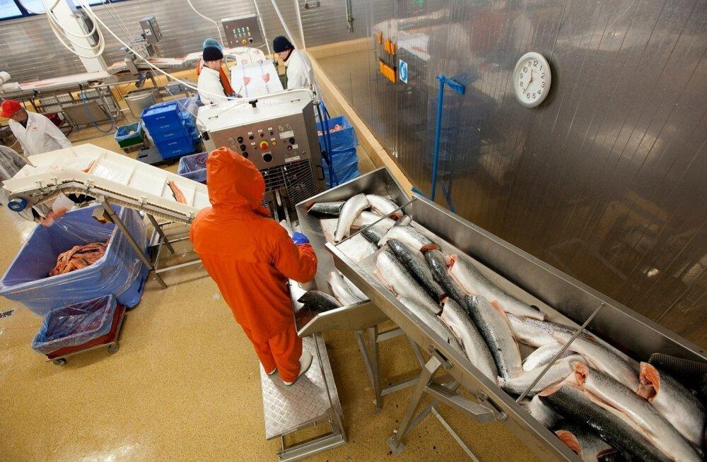 M.V. Wool: бактерия поступила с сырьем из Финляндии, но выходящая продукция безопасна
