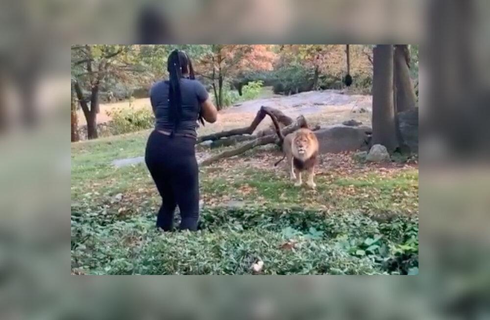 VIDEOD | Hulljulge naine ronis lõviaedikusse tantsima